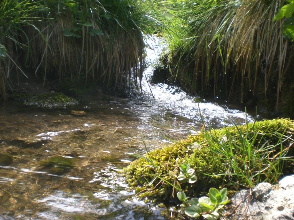 Kleiner Bachlauf mit Gräser und Wasserpflanzen