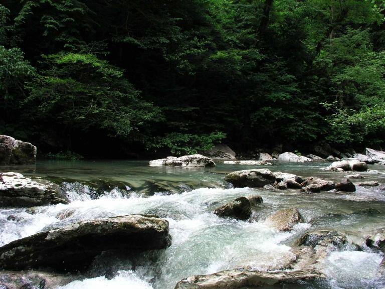 Fluss im Schwarzwald