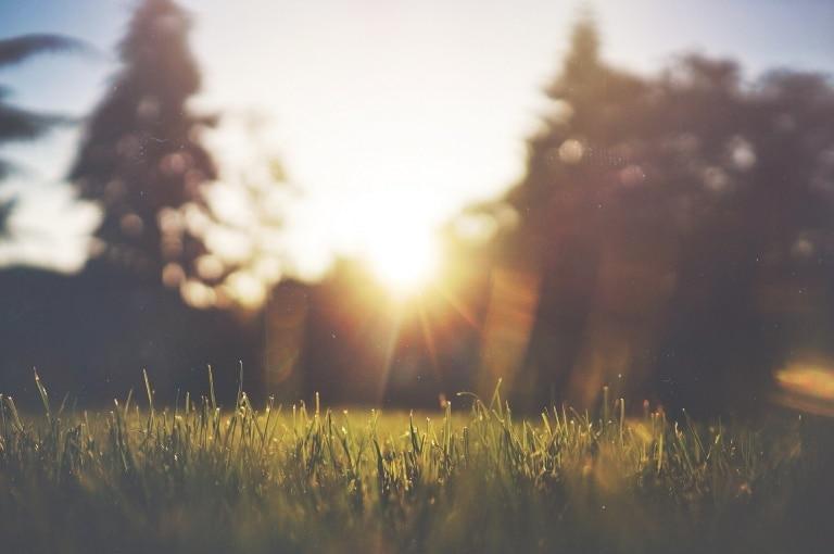Sonnenstrahl blitzt durch Wald auf Wiese