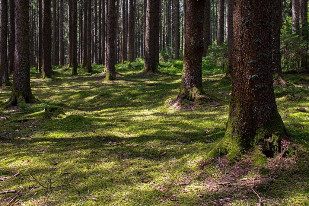 Waldboden mit Moos