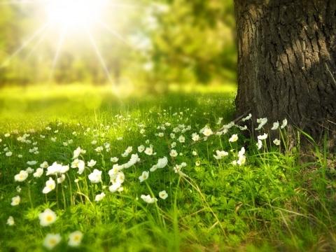 Fruehlingswiese mit Baumstamm und Sonnenschein