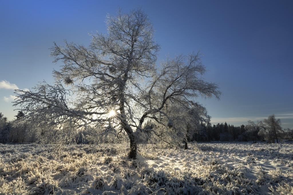 Schneehöhen Schwarzwald Aktuell