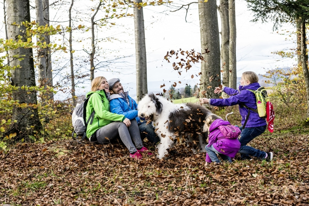 Familie mit Hund spielen mit Laub im Schwarzwald - Vier Jahreszeiten am Schluchsee