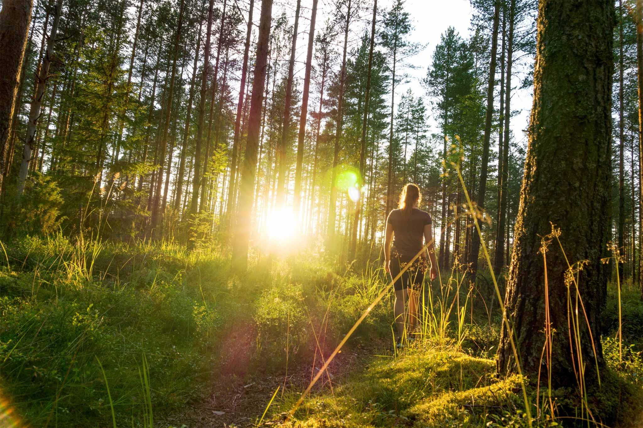 Frau spaziert durch den Wald während des Sonnenaufgangs