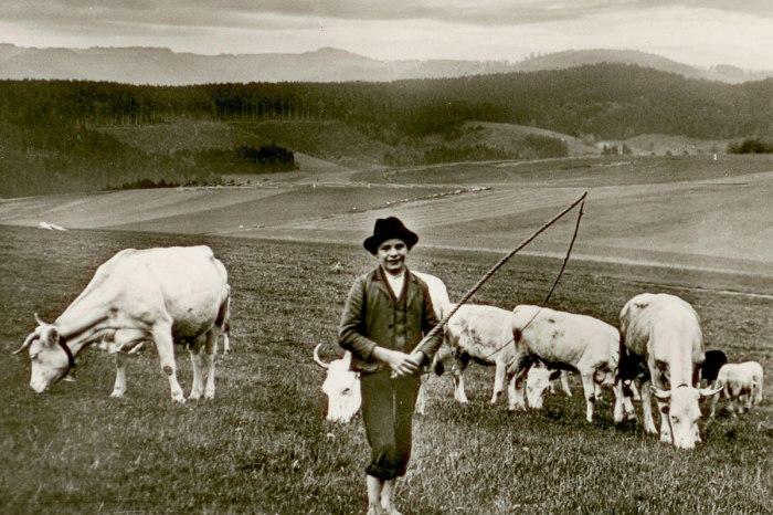 Alte Ansicht Hirtenjunge mit Kühen