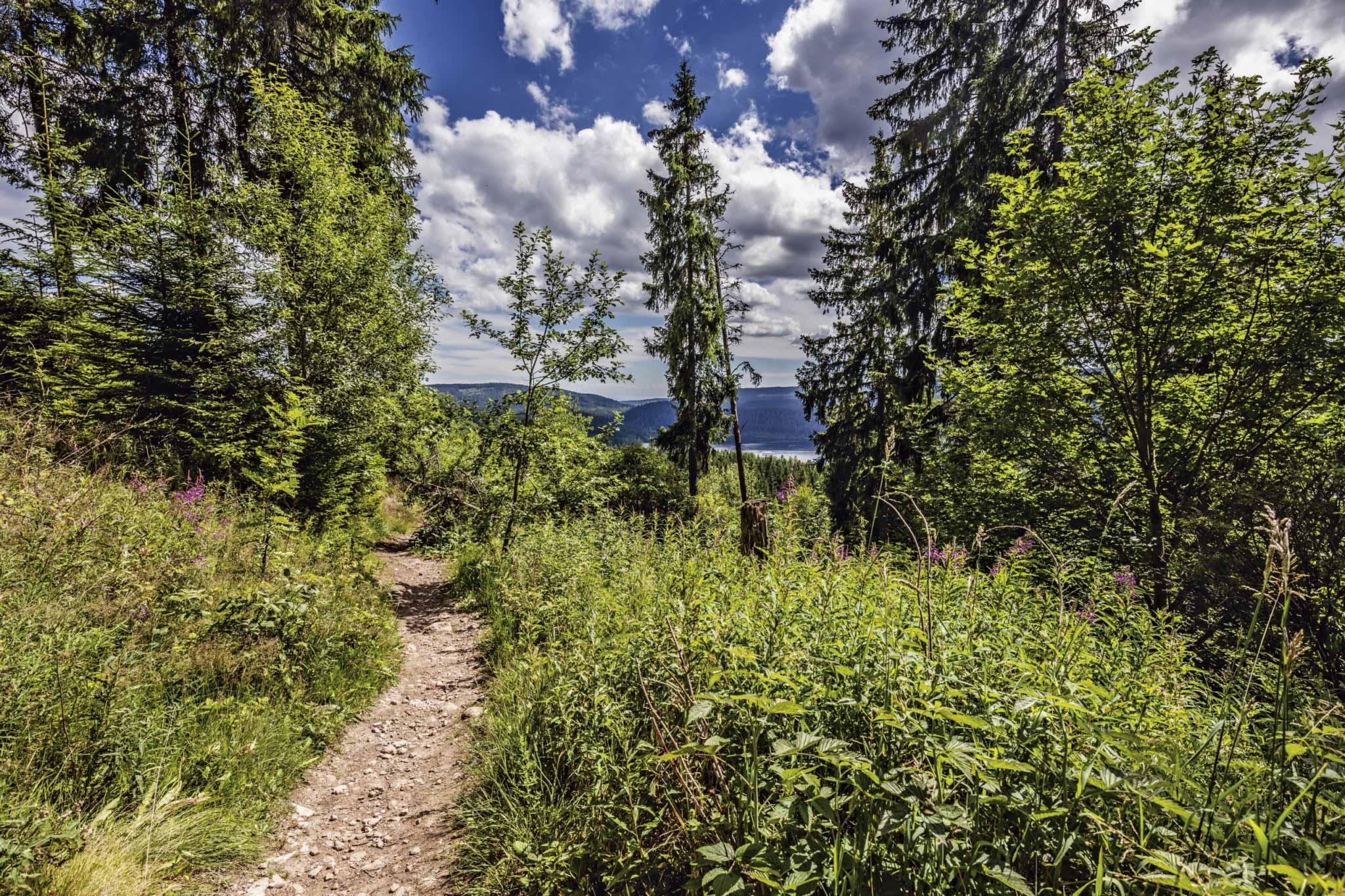 Wanderpfad im Wald mit Blick auf den See