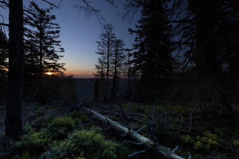 Schwarzwald in der Nacht