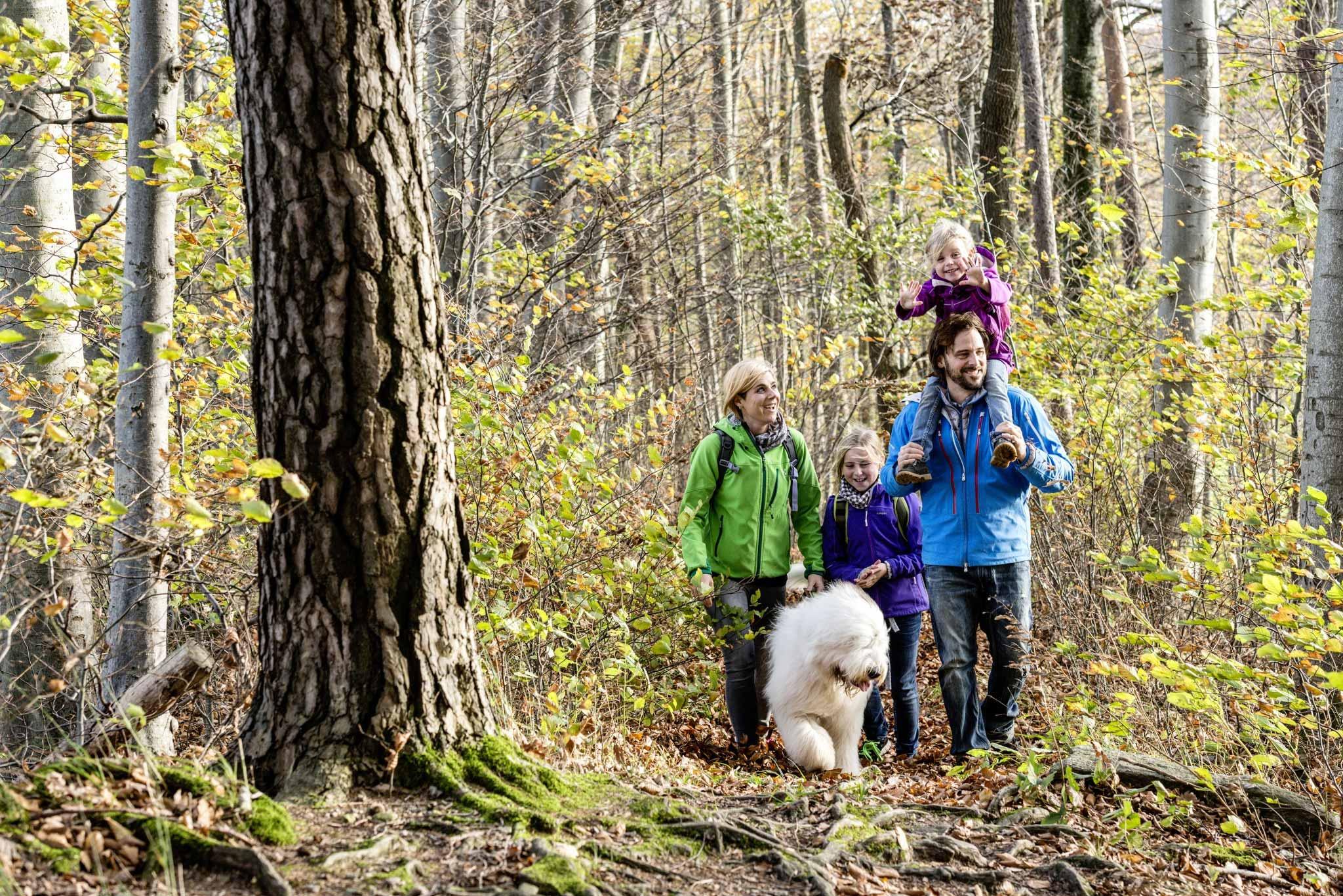 Waldspaziergang im Herbst mit der Familie