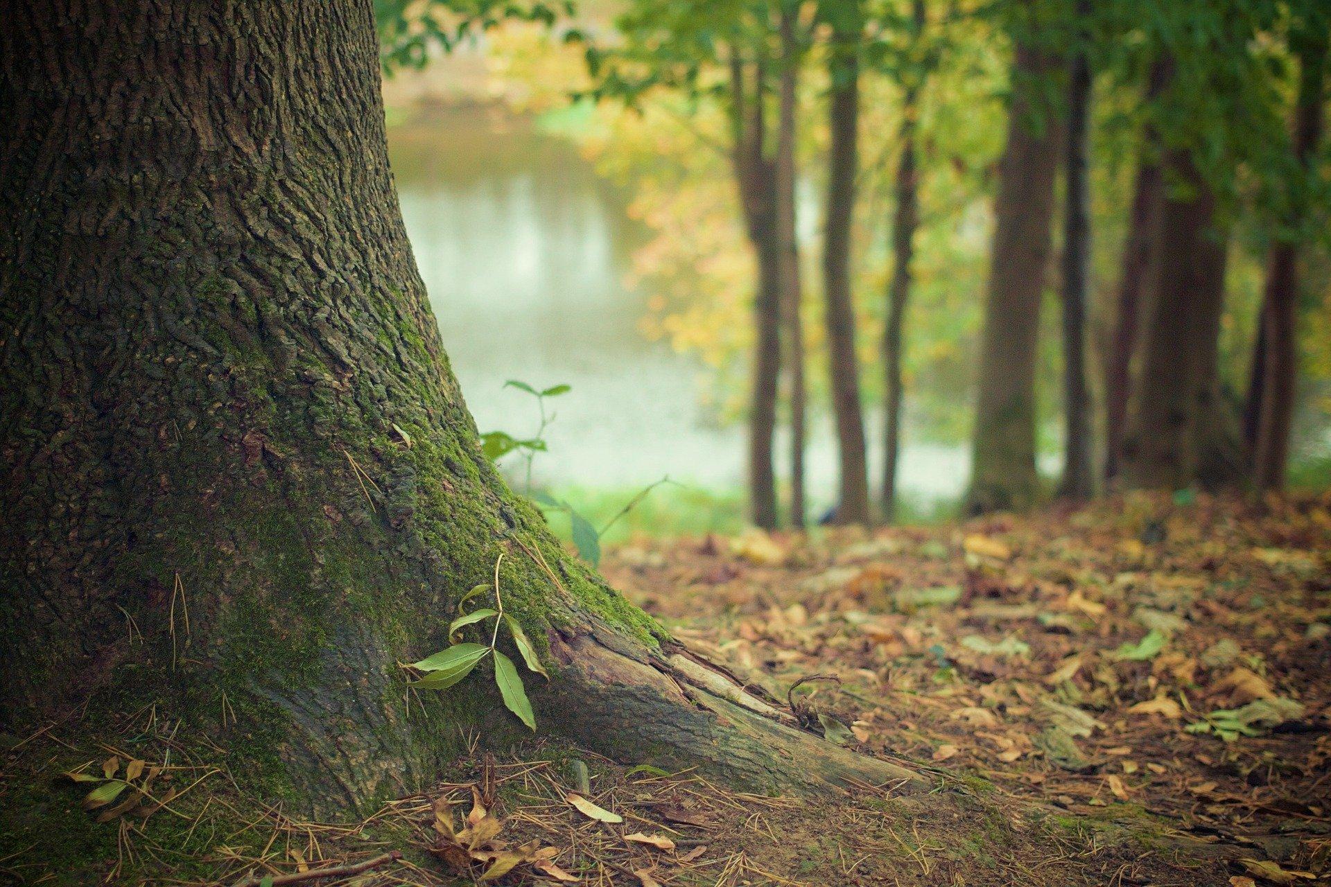 Baumstamm mit Waldboden und Laub