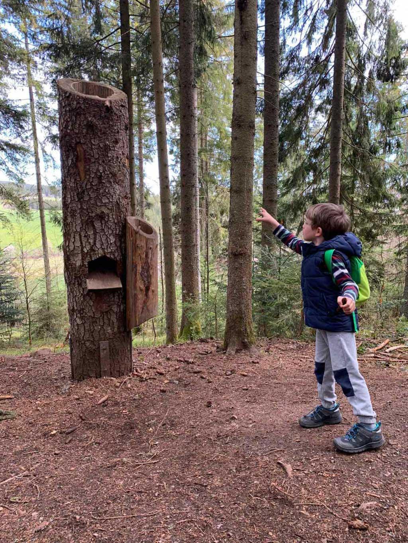 Kind wirft Tannenzapfen in Baumstumpf