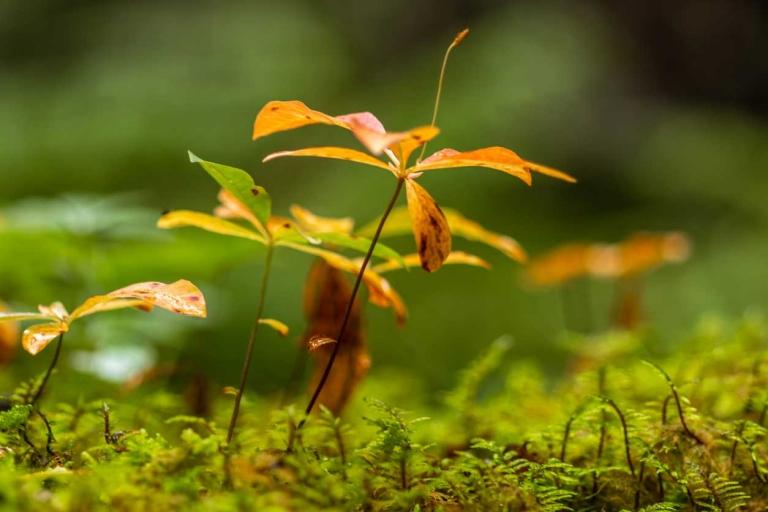 Bunte Blätter am Waldboden