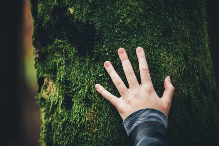 Hand auf einem vermoosten Baum