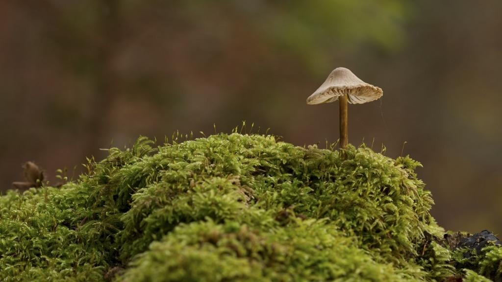 Pilz auf Moos