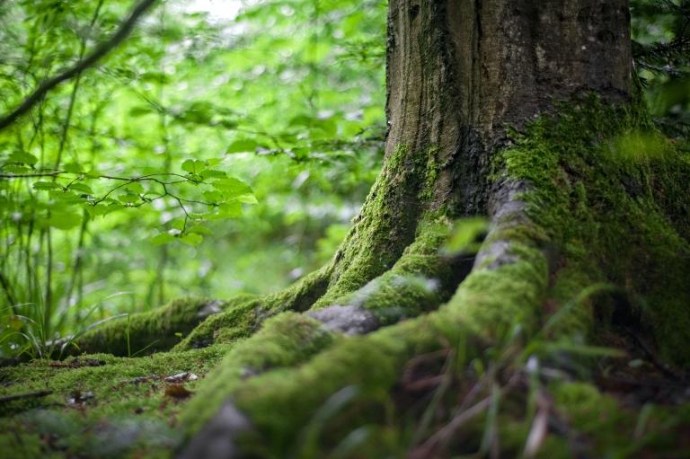 Baumstamm im Wald