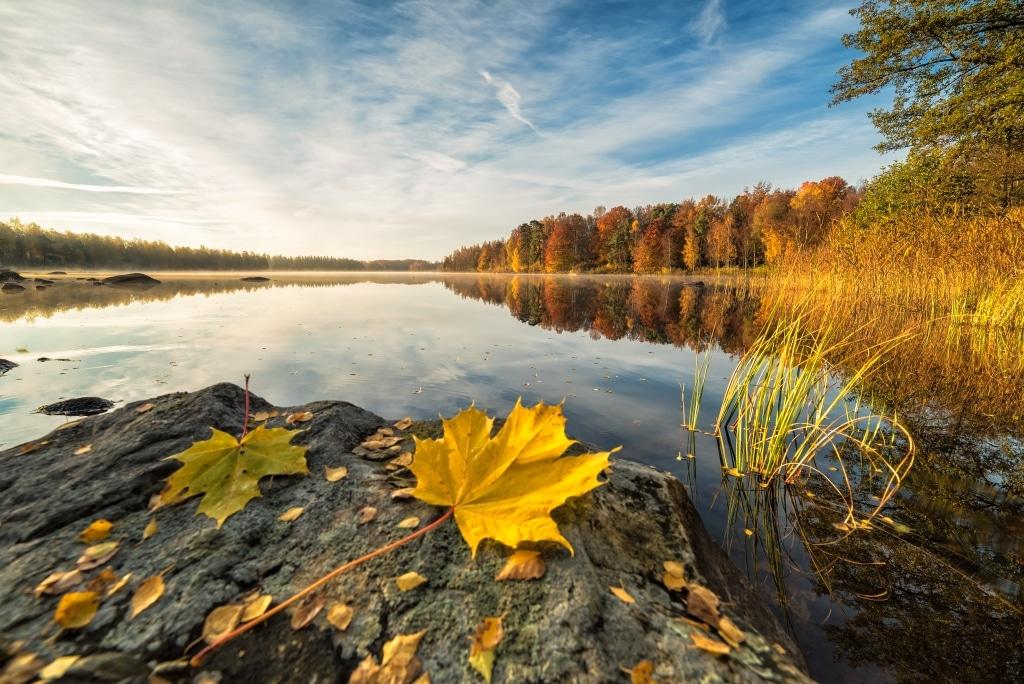 Herbstaufnahme am See